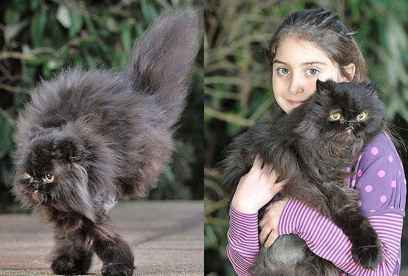 Любовта на малко момиченце връща двукрака котка към живота