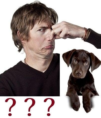 Как да се справим с лошата миризма на кучето?