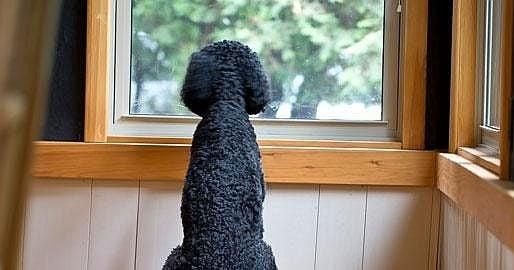 Лоши стопани ли сме, ако оставяме кучето самичко по 10 часа на ден?