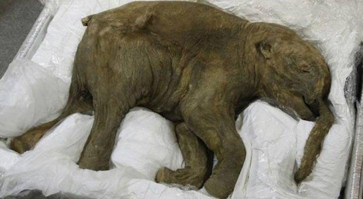 Лондонския исторически музей ще посрещне мамут на 42 000 години