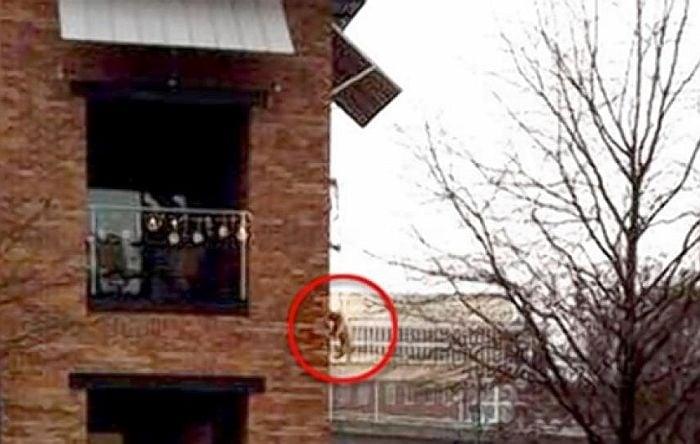 Вижте! Мъж провесва кучето си от втория етаж, за да може да отиде в банята