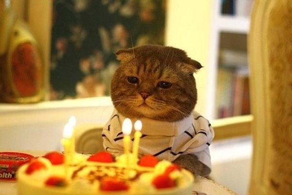 На колко човешки години отговаря възрастта на котката ни?