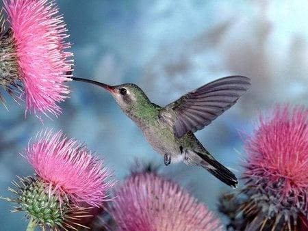 Кои са най - дребните птици на планетата?