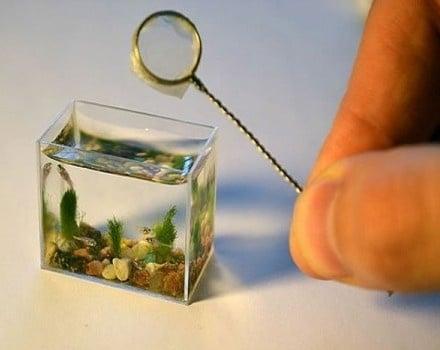 Най-малкият аквариум в света
