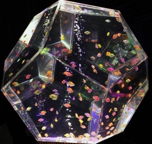 Най - подходящата форма за аквариум