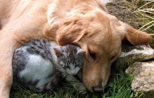 Брутален случай на отровени кучета в София