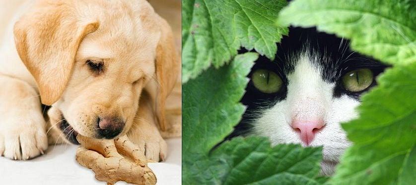 6 натурални аналгетика за кучета и котки