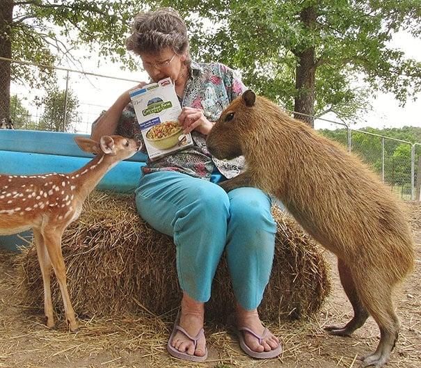 Не филм на Дисни, а реален дом за 60 животински вида, които съжителстват като приятели