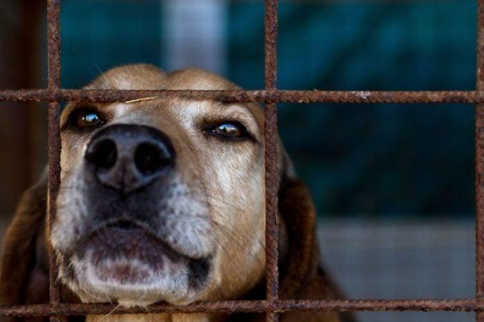 Природозащитници изграждат приют за бездомни кучета и котки в село Мало Конаре