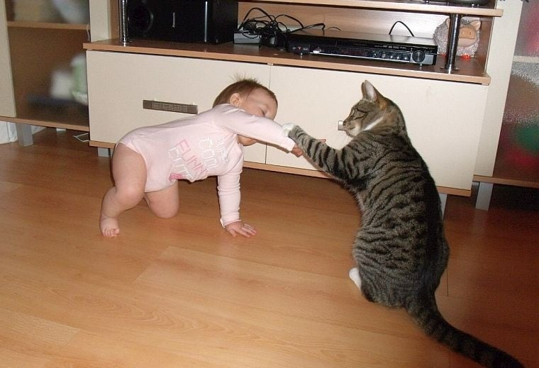 Няма да повярвате, че съществуват такива котки!