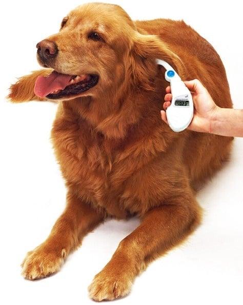 Общо изследване на кучето