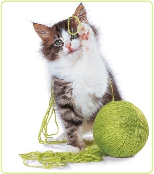 Социализация и подход към котката