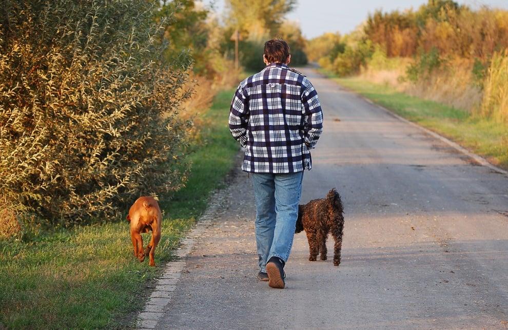 Обучение на кучето: Урок №25. Научете кучето да ви следва без каишка