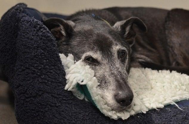 Осиновяване на възрастно куче - полезни съвети