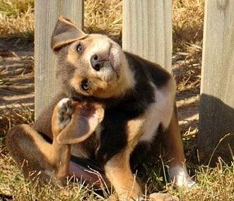 Паразити при кучето