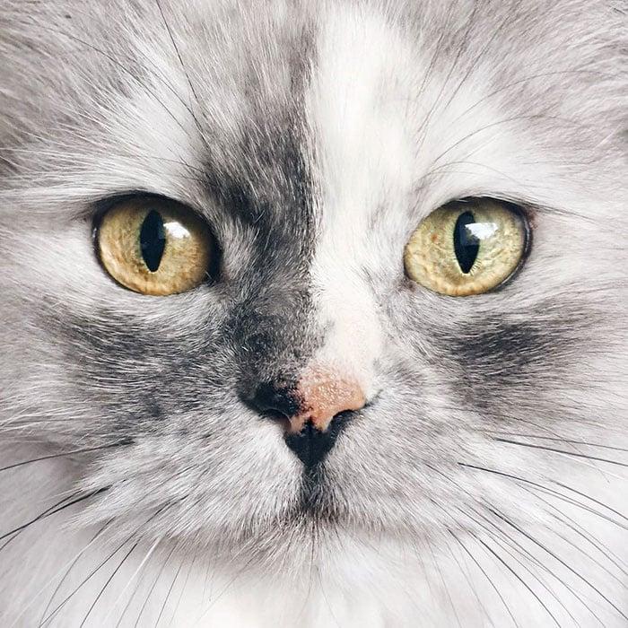 Запознайте се с Алис - котката с най - красива мраморна козина в света