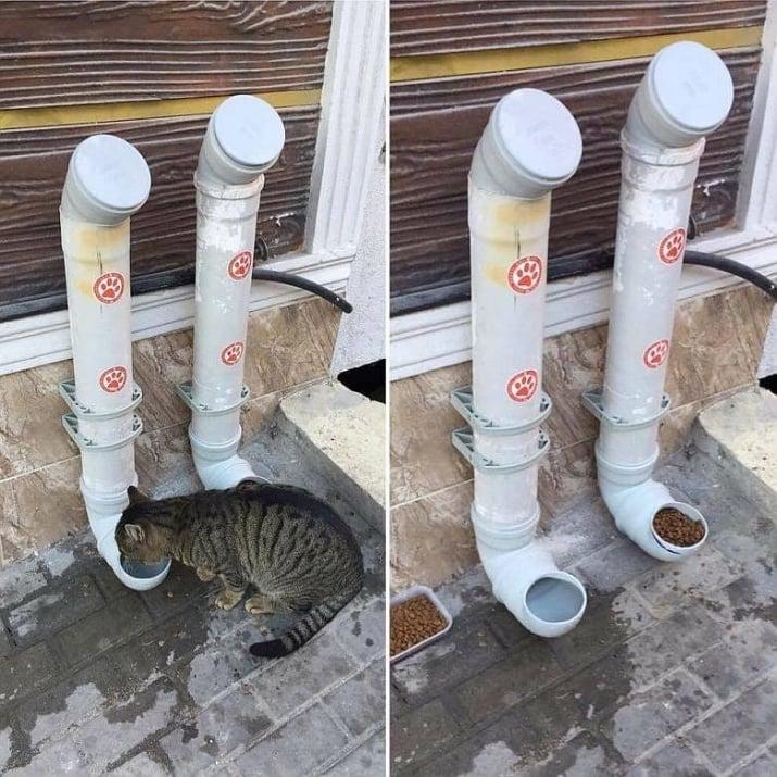 РЕСПЕКТ! Пловдивчанин направи автоматична хранилка за бездомни животни