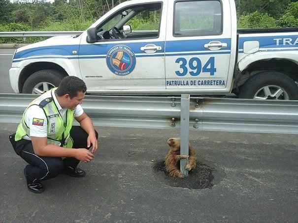 Полицай спаси ленивец, хванат в капана на оживена магистрала
