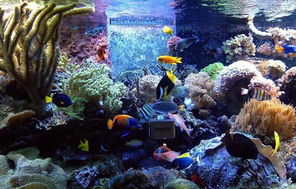 Прибори и устройства за аквариума