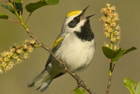 Птиците ни лекуват с песента си