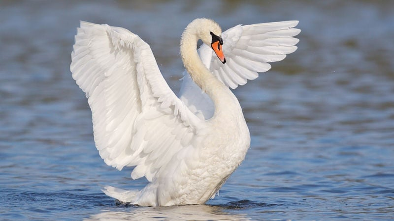 Птиците с най - много пера