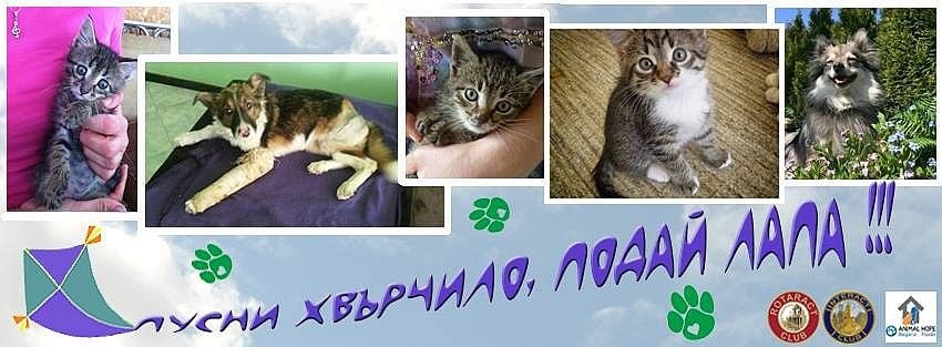 """Благотворителна акция за бездомни животни """"Пусни хвърчило, подай лапа"""" ще се състои на 4 юли в Пловдив"""