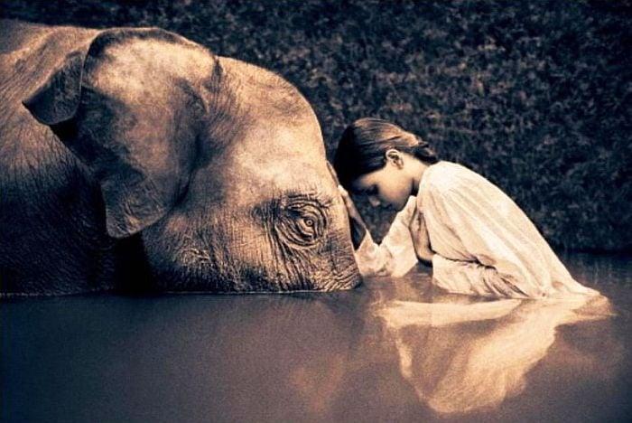 Разберете на кое животно отговаря вашата душевност