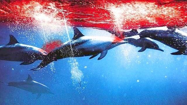 Рибари настояват да падне забраната за улов на делфини