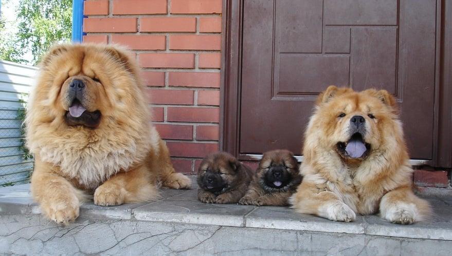 Най - очарователните семейни снимки на кучета