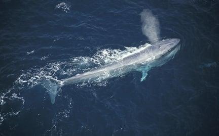 Кое е най - голямото животно на планетата?