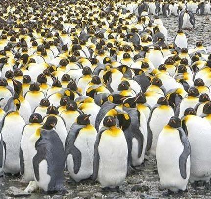 Учени следят популацията от пингвини от космоса