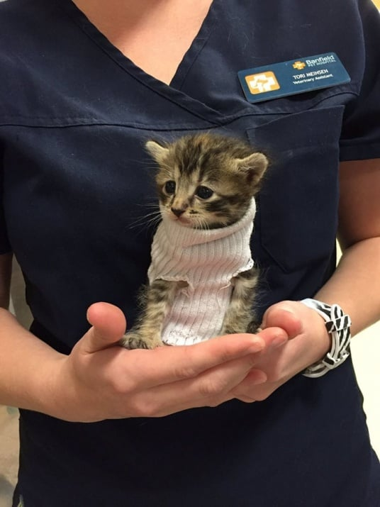 Котенце, спасено от ураган, се сдоби с пуловер и нов дом
