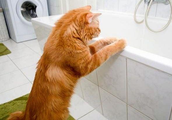 Трябва ли да къпем котката си?