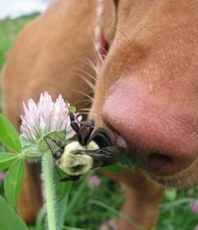 Ухапване от пчели, оси, стършели и мравки при кучето