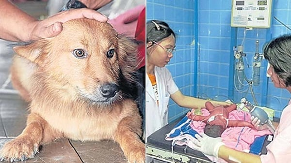 Улично куче намери и спаси бебе, изхвърлено на боклука