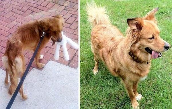 Уникалната промяна на кученца преди и след осиновяването им