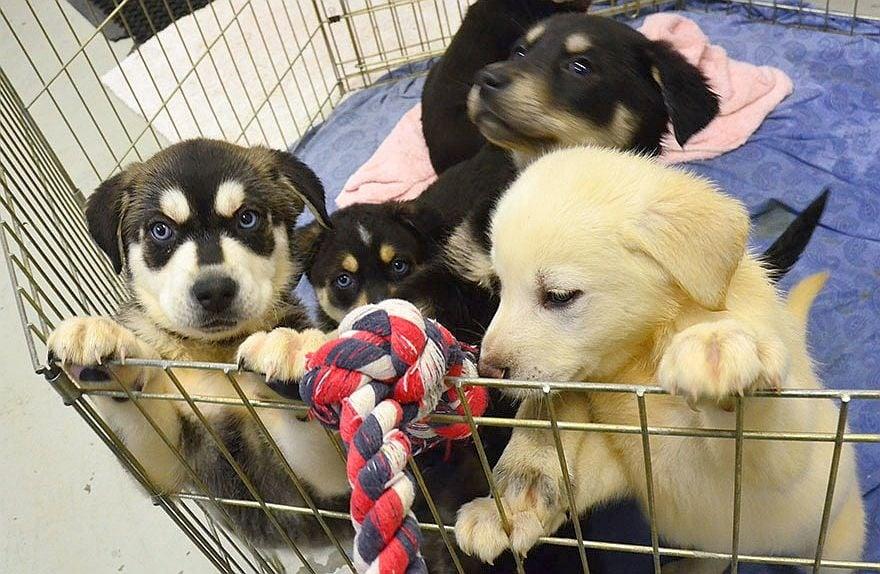 За да лекува стреса на студентите, университет отваря стая за галене на кученца