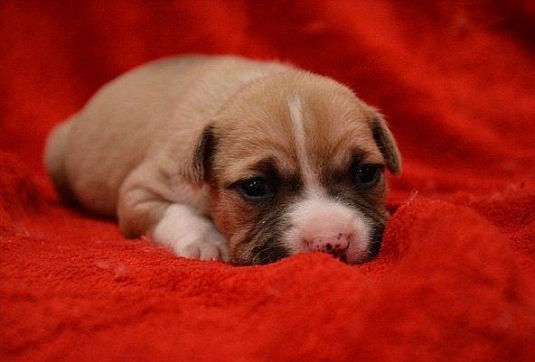 13 неща, които всеки стопанин на кученце трябва да притежава