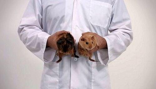 Морски свинчета показват как мъжете да се грижат за здравето си
