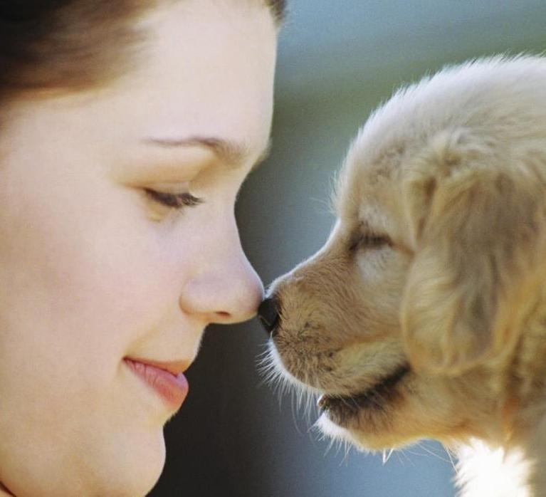 Връзка между хората и животните