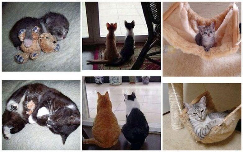 Вълшебното израстване на малки котенца в големи котки (снимки преди и след)