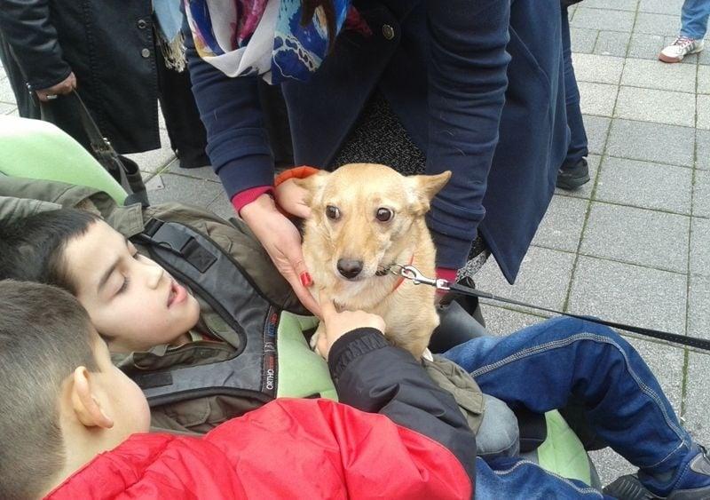 За първи път в България улично куче ще работи като терапевт на дете с увреждания