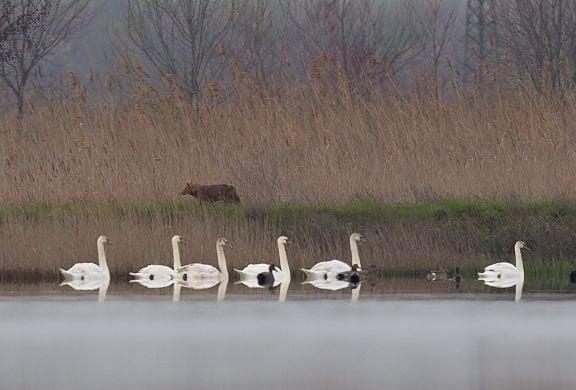 Ловът у нас се забранява! Ето какво ни съветват БДЗП за ограничаване разпространението на птичи грип