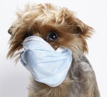 Заразни болести - Кучета