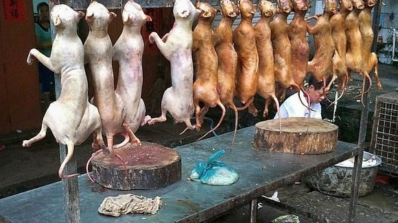 Защитници на животните призовават яденето на кучета и котки в Швейцария да се забрани