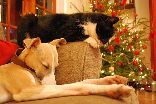 Защо котките и кучетата наистина се вълнуват за Коледа?