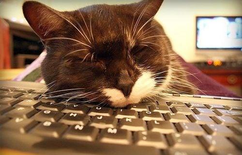 Защо котките обичат да спят върху клавиатурата ни?