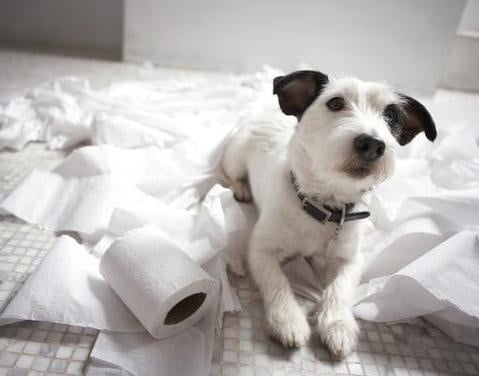Защо кучетата обичат да дъвчат хартия?