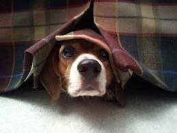 Защо кучето се страхува от гръмотевици?