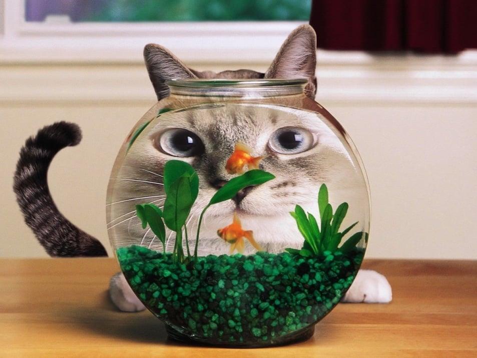 Защо не бива да изхвърляме водата от аквариума?